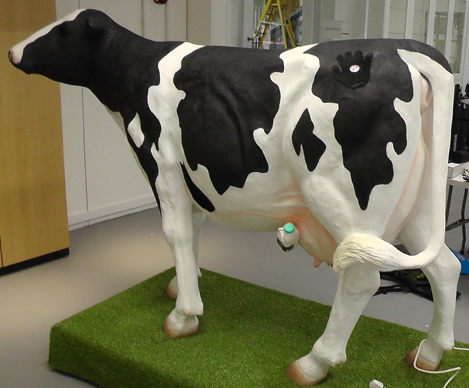 a-sensory-cow-at-merl