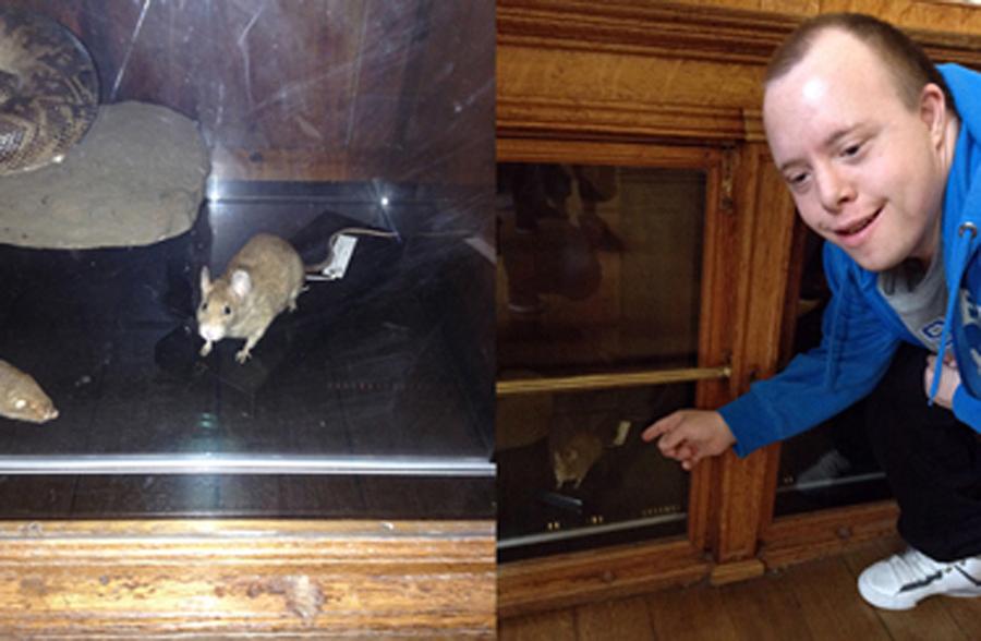 Ashley chose a Rat