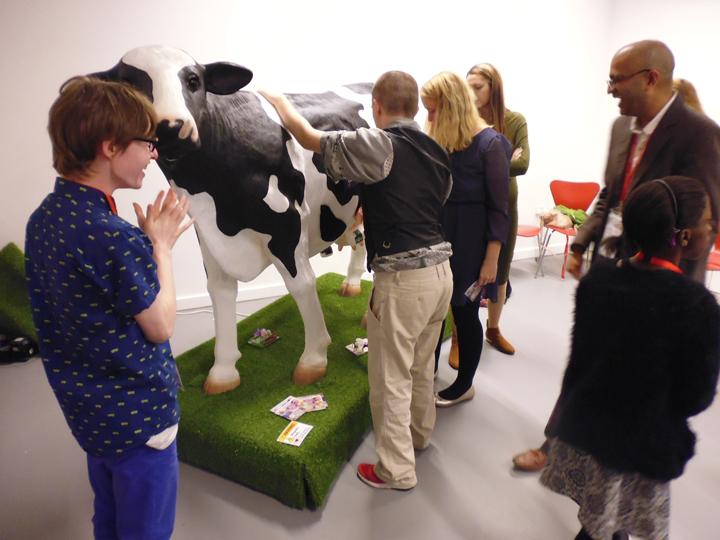 showcasing-cow