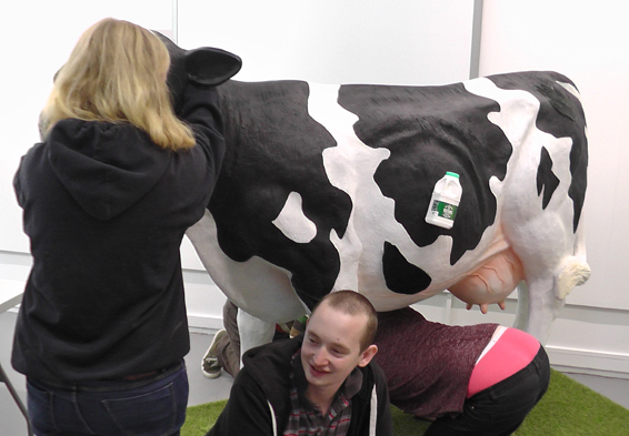 working-on-the-cow